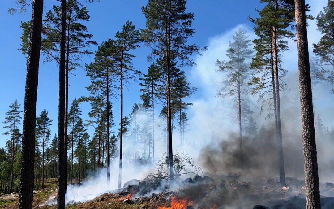 Skogsbrand på Oppunda häradsallmänning